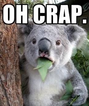 koala meme
